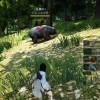 馬とか熊とか発見しました【LV15】【黒い砂漠Part7】