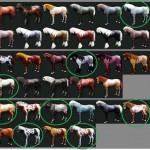 馬の世代見た目一覧 / 7世代8世代馬組み合わせ