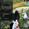 ペンギン合成で初の4世代誕生【黒い砂漠Part393】