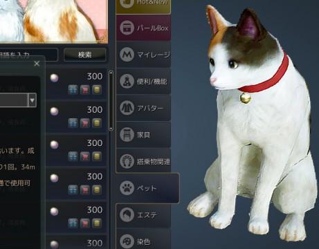 三毛猫01