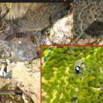 バルタリの冒険日誌10章 / ハスラ遺跡の場所【黒い砂漠Part2267】