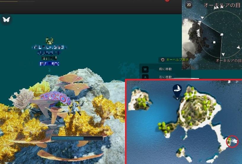 ラッパ珊瑚とマダラ珊瑚の場所を探して五色サンゴの欠片集め開始03