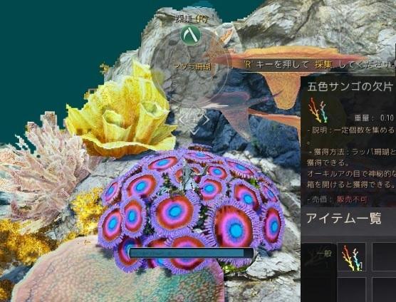 ラッパ珊瑚とマダラ珊瑚の場所を探して五色サンゴの欠片集め開始04